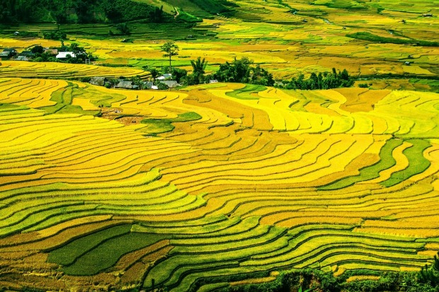 rice-terraces-214725_1280